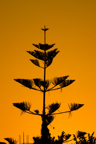 sunset tree cyprus nicosia