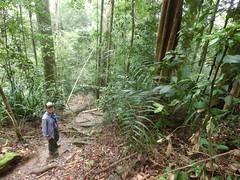 Umgeben von Urwaldriesen - Taman Negara