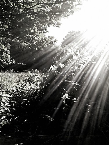 Sunray | by Mr B's Photography