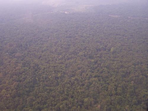 Sao_Felix_Xingu-corte_seletivo-01