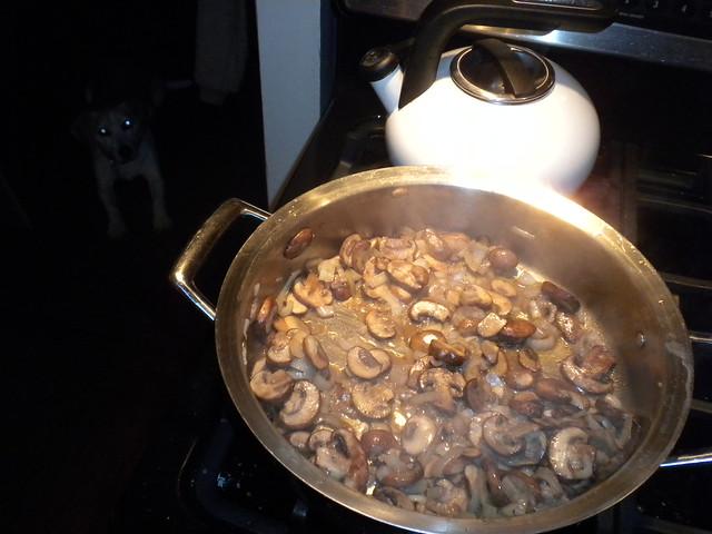 mushrooms, tea kettle, and beagle