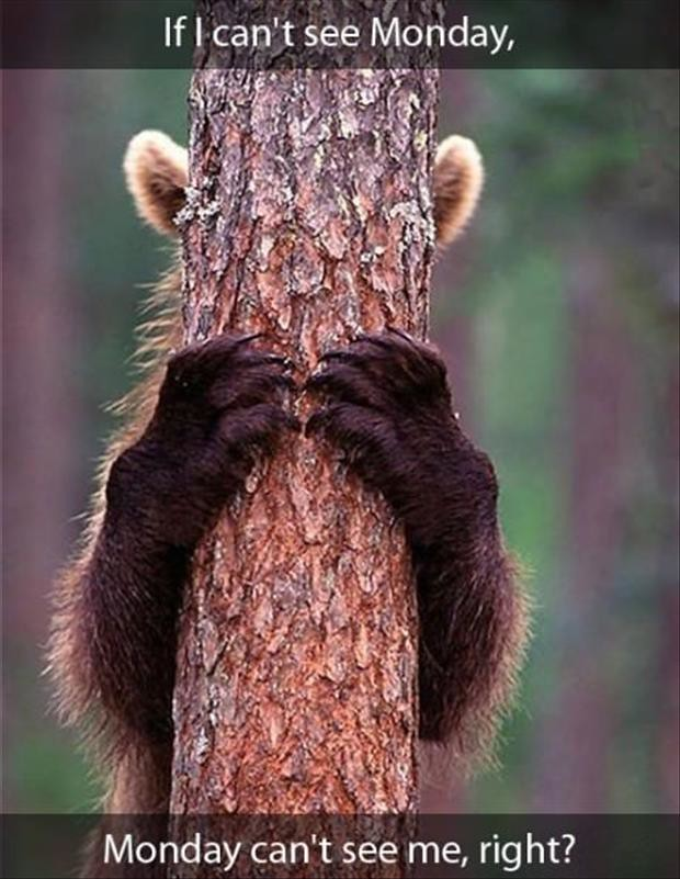 Funny Monday Morning Pictures Bear Hiding His Eyes Flickr