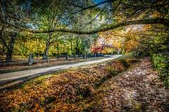 Mt Macedon Autumn Colours-28