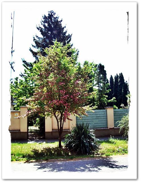 Three tree on my road-Három fa útközben