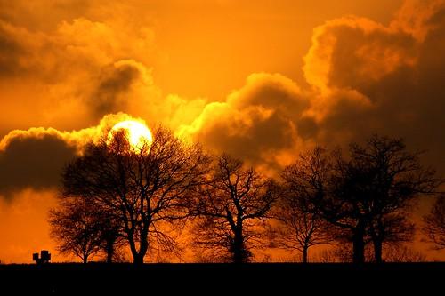 trees winter sunset orange sun colour nature silhouette clouds contrast wintertrees