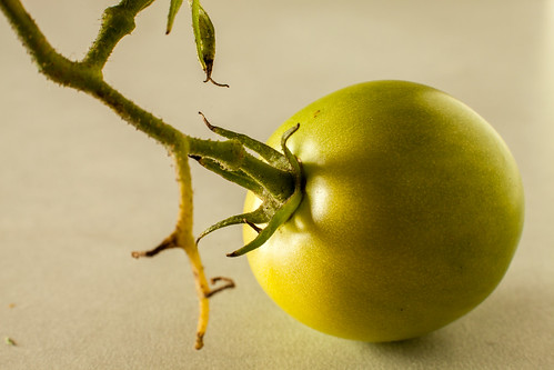 Little Green Tomato | by E V Peters