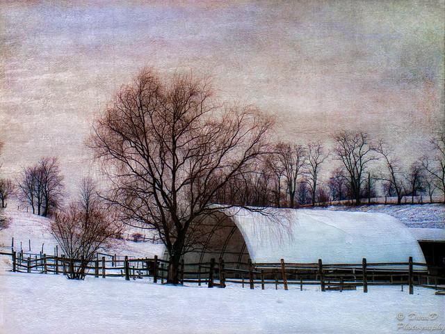 Winter Farm View