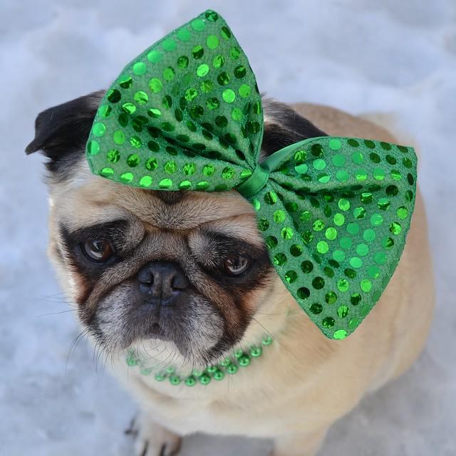 The St. Patrick's Day Diva