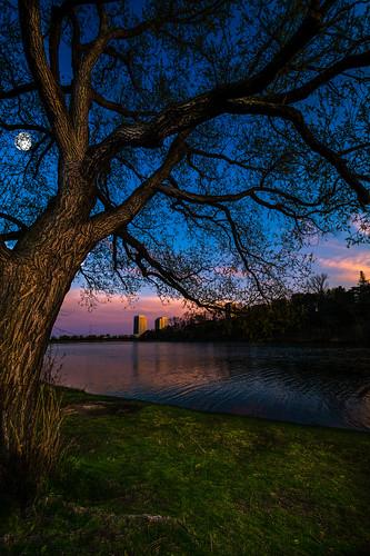 blue sunset sky moon toronto tree nature sunrise pond highpark fullmoon grenadierpond 80sgirlart tracymunson