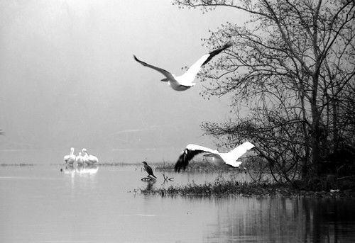 Birds in Fog on San Jacinto backwater | by AtchisonGallery
