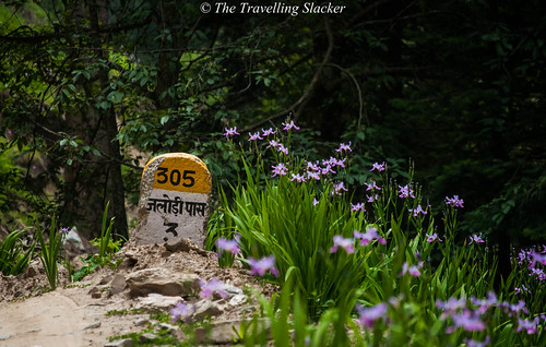 Shoja to Jalori (11)   by travelling slacker