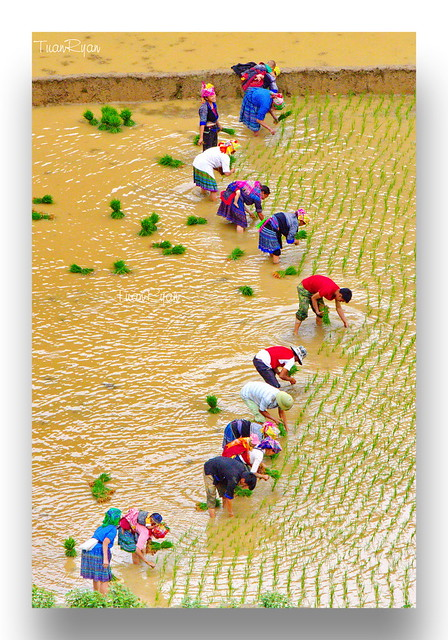 Vietnam's symbol - S