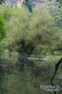 Spiegel im Wald
