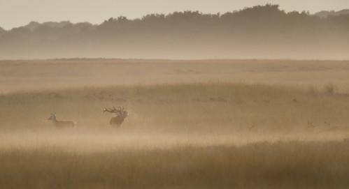 HVDO201309120009356 | by Hans van den Oever