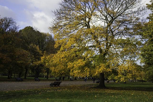 Kensington Park - colours of autumn