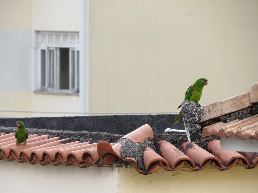 Casal? | O que não falta é maritaca no Rio de Janeiro. | Márcio ...