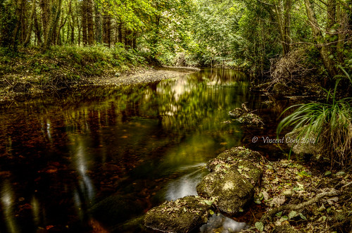 county trees ireland green water leaves reflections river photography nikon rocks vincent wicklow dargle coey d5100