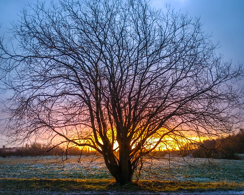 england snow tree field sunrise unitedkingdom lincoln