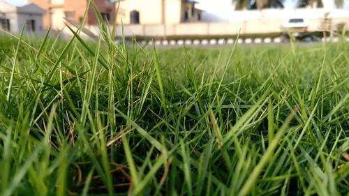 life light green grass