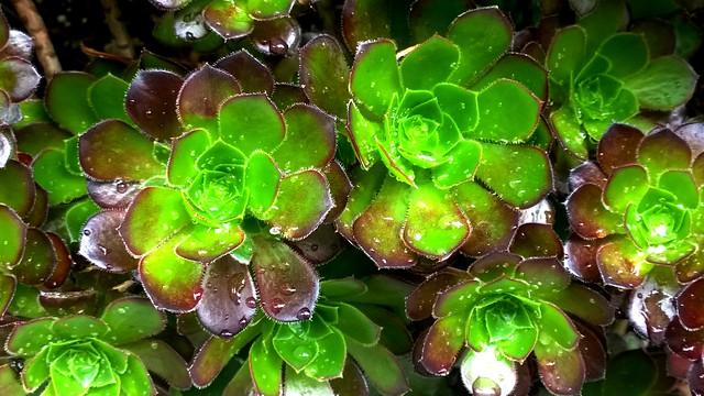 Green Cactus Flowers