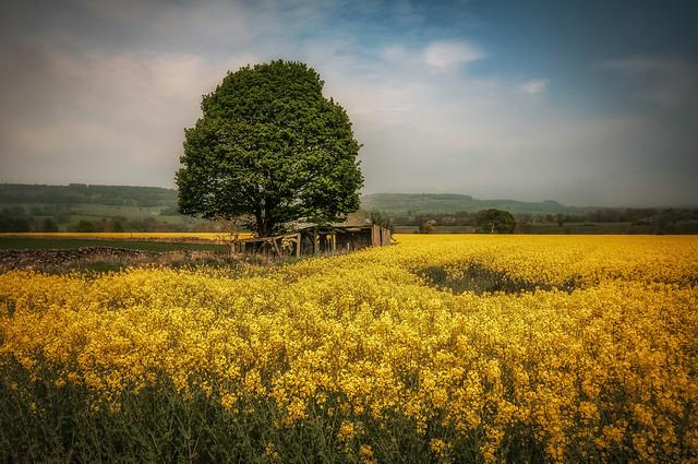 Yellow mellow xx