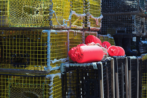 Pink Buoys and Yellow Lobster Traps