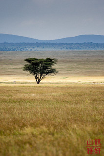 Lone tree on the plain | by DragonSpeed