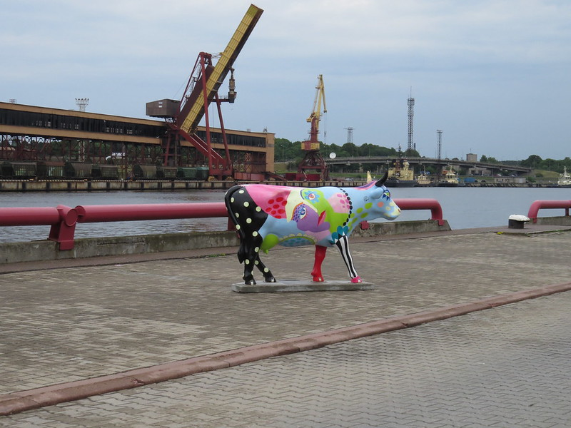 Cow in Ventspils