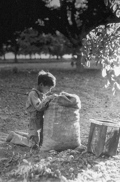 Little Boy in Walnut Grove, Puente, California 1905