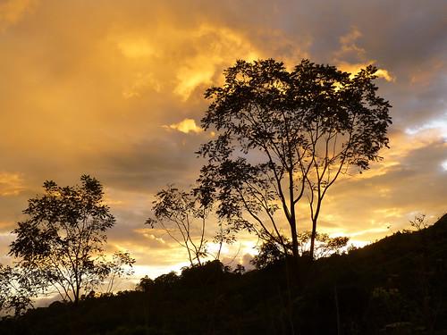 trees sunset sky naturaleza nature costarica colorful árboles cielo cedro
