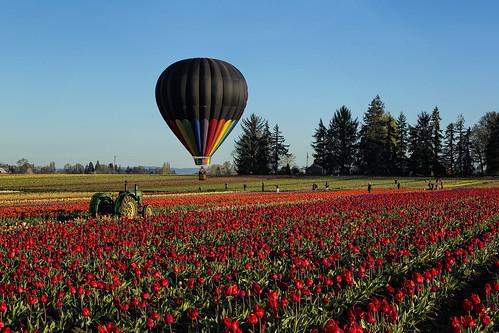 tractor hot flower field oregon shoe wooden spring farm air balloon tulip woodburn