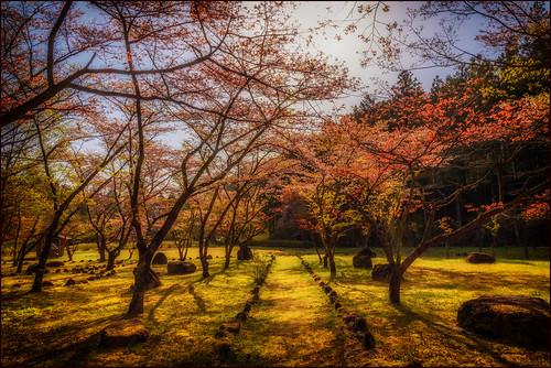 japan jp sakura cherryblossoms nikko ornamentalcherry martinsmith tochigiken nikkōshi nikkor2485mmf3545gedvr nikond750 ©martinsmith japan2016 ileftmycamerasettovancouvertime