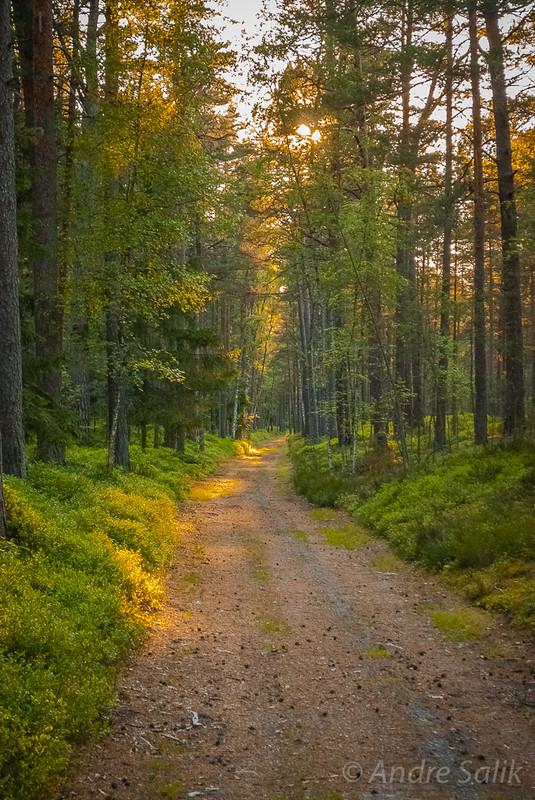 forest. сказочный лес!!! 20:54:36   DSC_2849