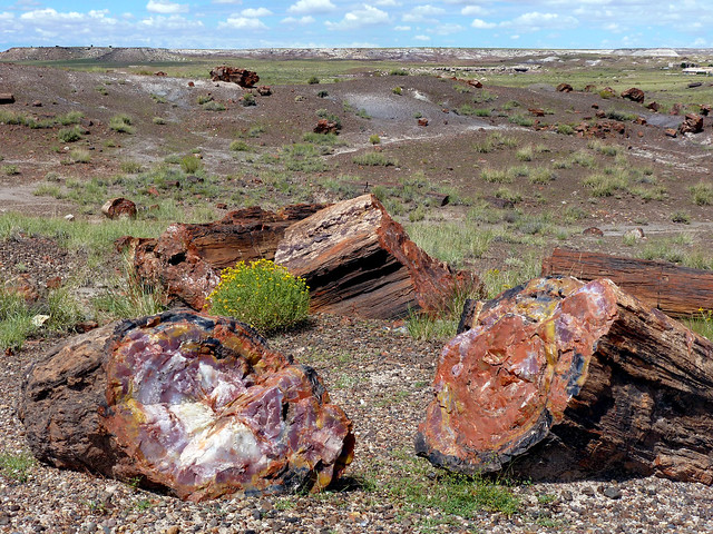 Rainbow Forest, Petrified Forest National Park - Arizona