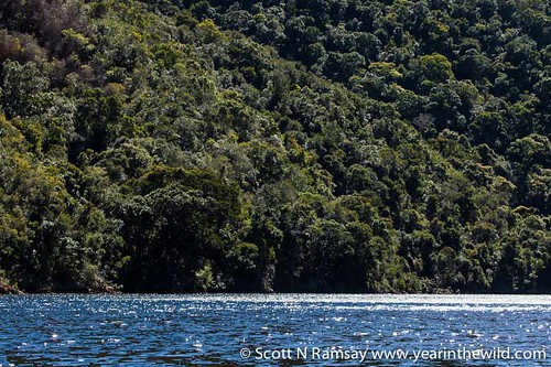 Keurbooms River Nature Reserve - South Africa   by scottnramsay