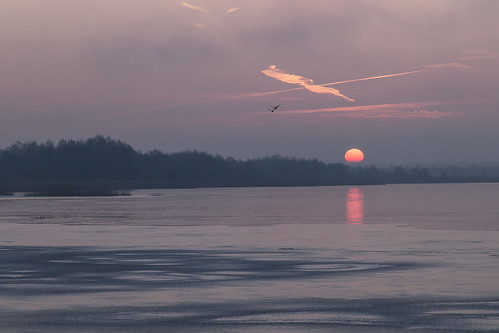 winter sunrise frost natur eis sonnenaufgang morgen gefroren naturfotografie steinhudermeer zugefroren icecovered