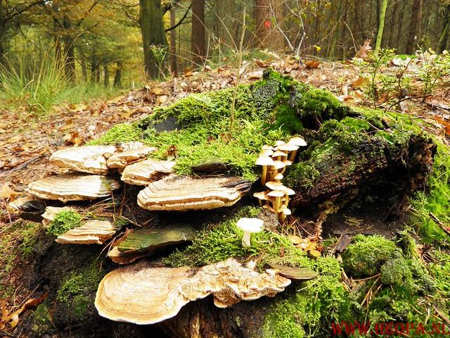 20-10-2012     Wedeblick-   Driebergen        25 Km (115)