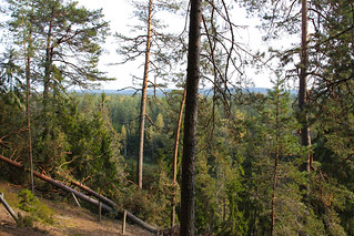 Boreal_forest_
