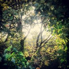 morning light on leaves #vertraging