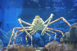 Osaka Aquarium Kaiyukan | by MatthewW