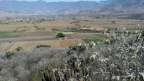 oaxacan fields 2 | by cheeses