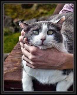 Cat - P1190940 | by Scott 97006