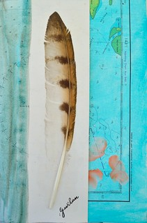 gavilan feather (sparrowhawk) | by Smallest Forest