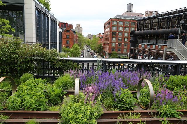 Flowers plants High Line New York