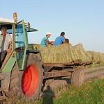 Begegnung mit Hans Herbst auf der Sauerländer Hutweide. Er betreibt eine der größten Milchviehwirtschaften im Ort.