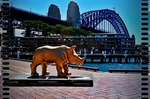Rhino002 | by Christopher Yardin