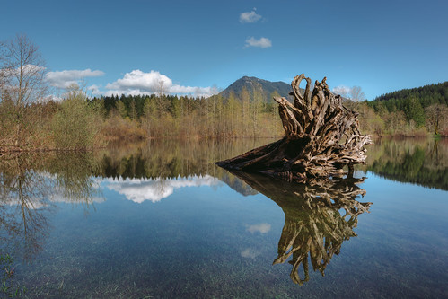 rattlesnakelake roots water reflection pacificnorthwest landscape bluesky nature scenic canon pnw pwpartlycloudy day canoneos5dmarkiii canonef2470mmf28lusm washington johnwestrock