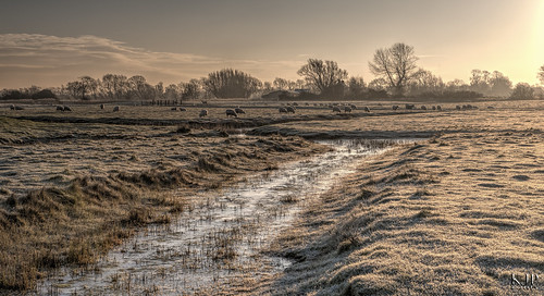 morning sun ice sunrise landscape frost sheep hoarfrost hdr landscapephotography hdrphotography