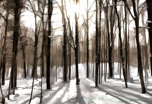 music song peace wooded nature trees snow branches path white winter trail sun cold lovely topaz shadows digitalart effect enhanced