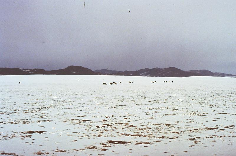 MONGOLIA 1994 01-0005
